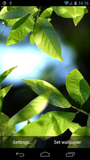 fresh-leaves-live-wallpaper-1