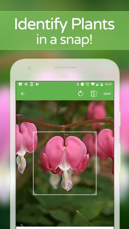 Hangi Çiçek Olduğunu Telefonunuzdan Öğrenin