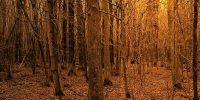 Sonbahar Ağaçlar Duvar Kağıdı