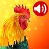 Telefon için Hayvan Zil Sesleri Android Uygulaması